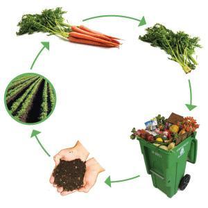 IPNOSI COLLETTIVA | La frazione umida dei rifiuti