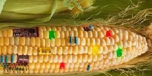 Vietato vietare gli OGM. Una legge muove i primi passi negli USA