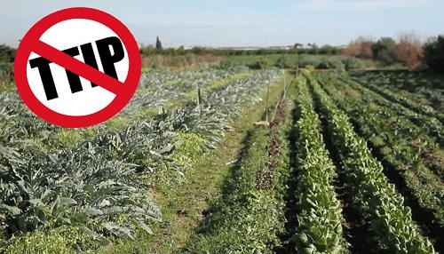Secondo gli USA il TTIP sarà un disastro per l'agricoltura UE. Interrogata la Commissione