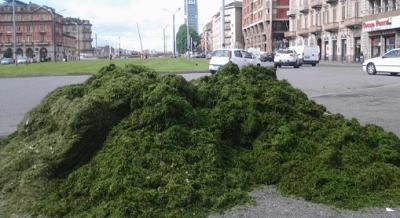 Sfalci e potature di parchi e giardini? Nel compost! Commissione Europea dà ragione al M5S