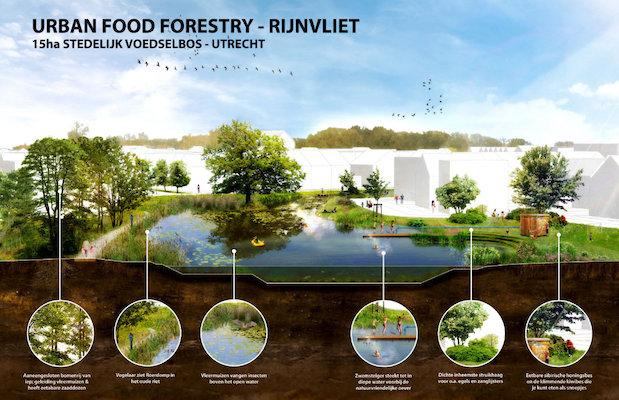 """Virginia Raggi parla di """"food forestry"""" in città. Di che si tratta?"""