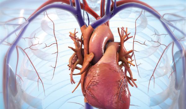 Stampato in 3D tessuto cardiaco vivente per riparare il cuore danneggiato